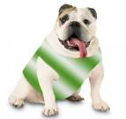 Doggie Tank in St. Patrick's Day Colors
