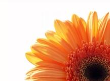 2012 Lenzing Spring Summer Color Forecast